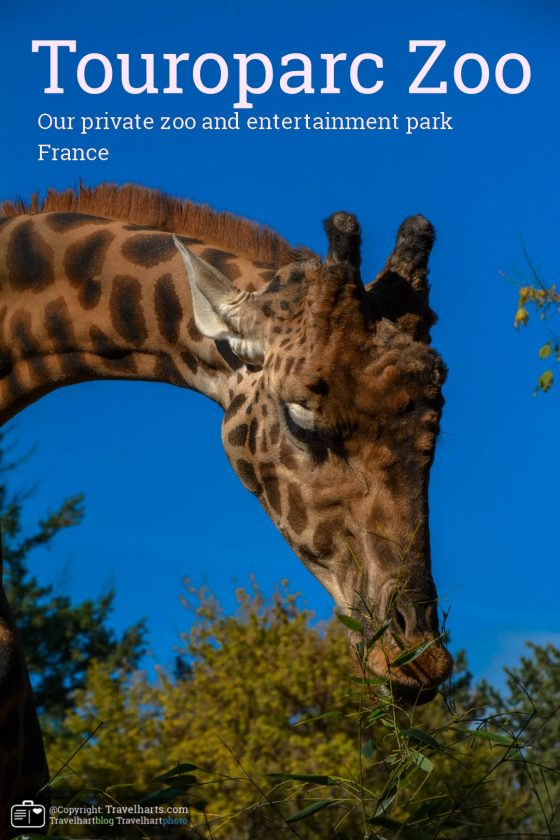 Touroparc Zoo: our private zoo and entertainment park – France