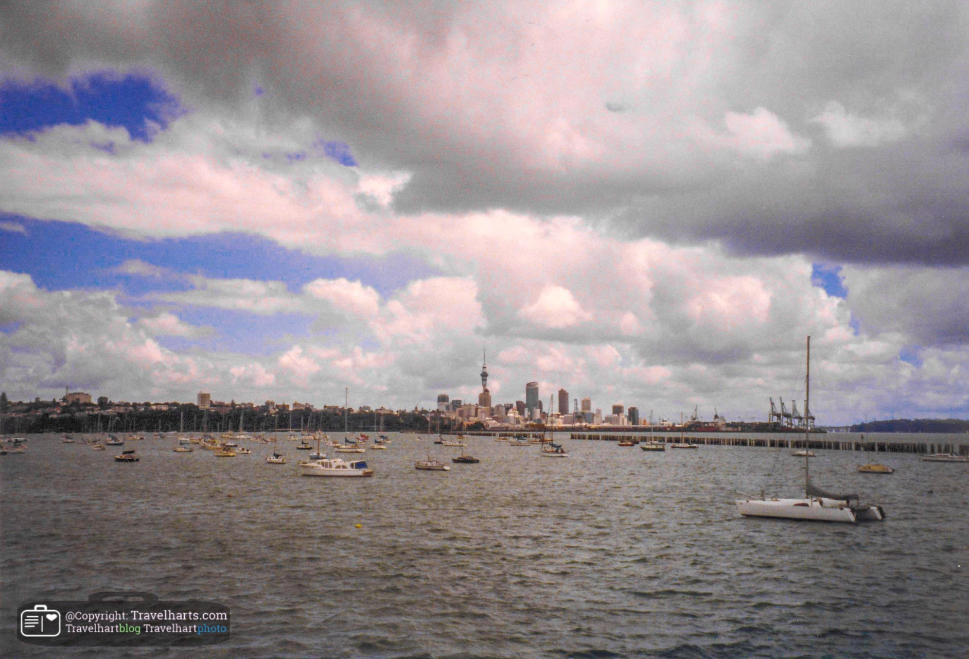 Dolphin boat – Auckland (New Zealand)
